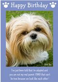"Shih Tzu-Happy Birthday - ""I'm Adopted"" Theme"